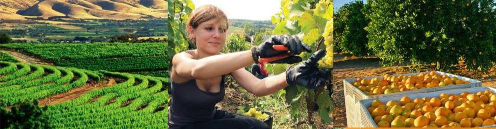 Lavoro garantito farm brisbane