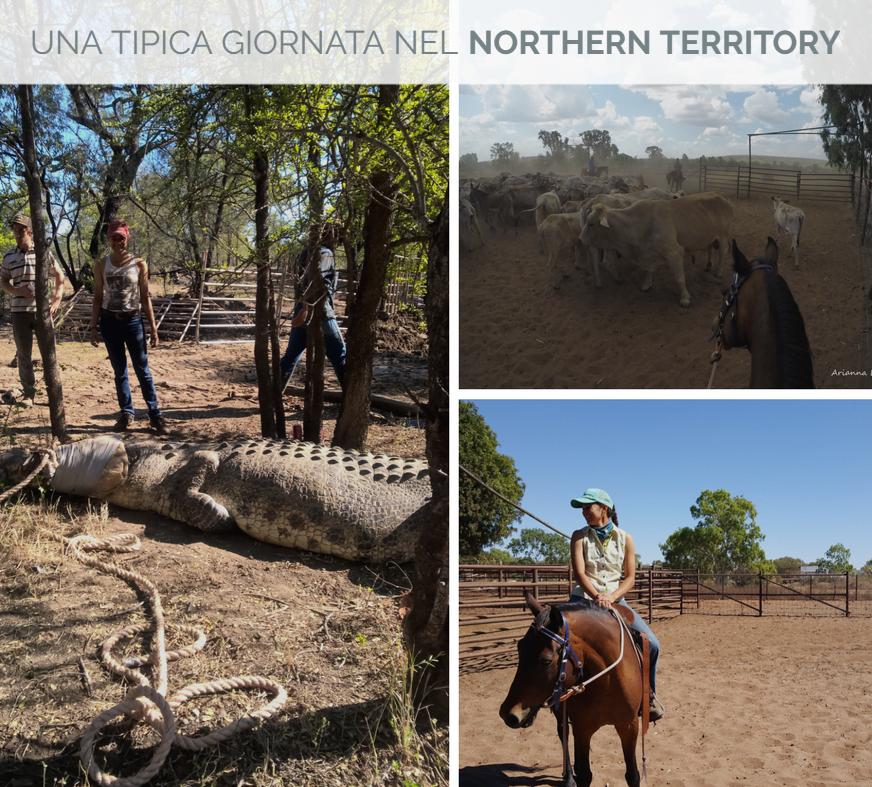 Northern Territory - Una giornata tipica