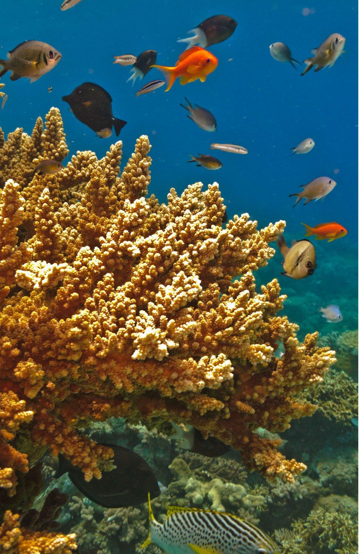 Offerta università: corso scienze naturali o biologia marina