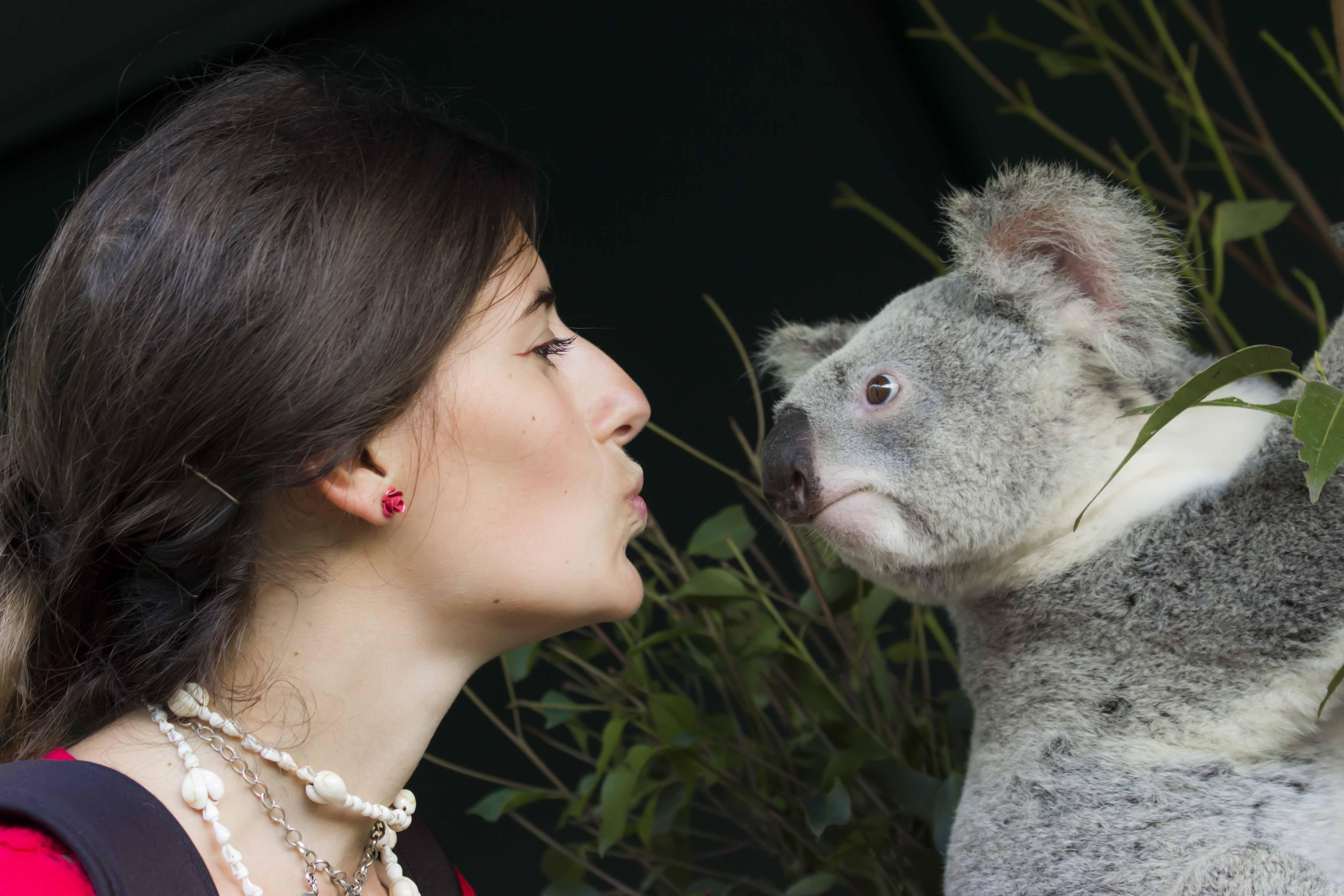 Alla scoperta dell'Australia con In Viaggio Col Tubo: koala