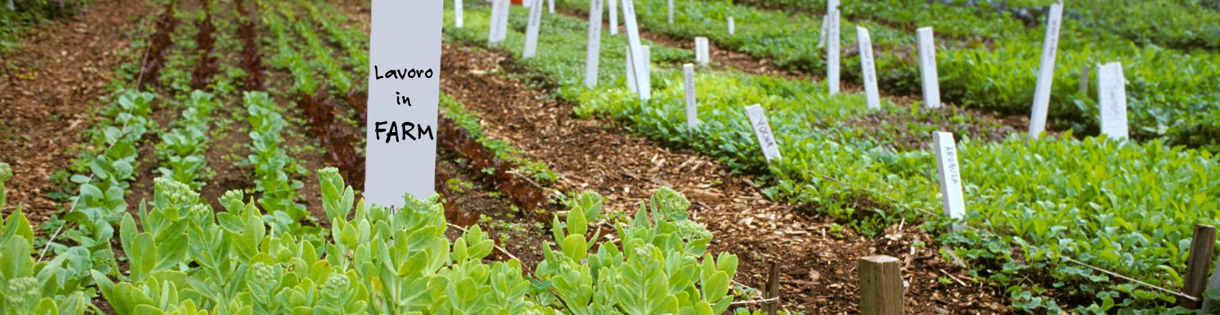 Consigli e opinioni sul lavoro in farm - L'esperienza di Corinna e Simone