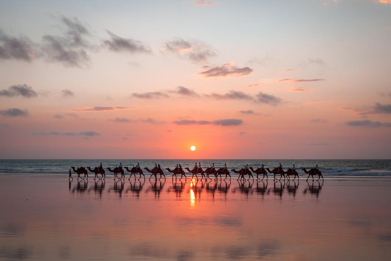 Più cammelli che in Arabia Saudita