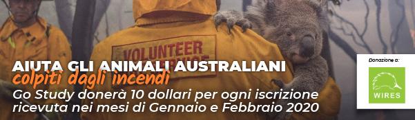 Donazione Go Study per aiutare gli animali colpiti dagli incendi in Australia