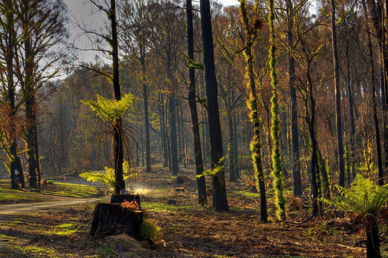 È sicuro andare in Australia, nonostante gli incendi?